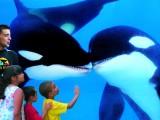 orcas-01_copy
