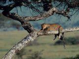 le-repos-du-leopard_940x705