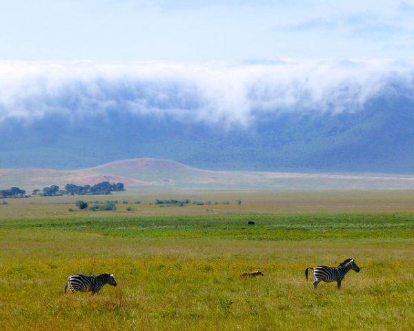 se rendre en Tanzanie visiter le cratèreNgorongoro