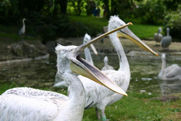 pelican zoo mulhouse